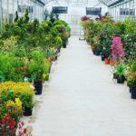 vendita-piante