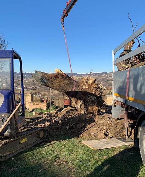 rimozione albero