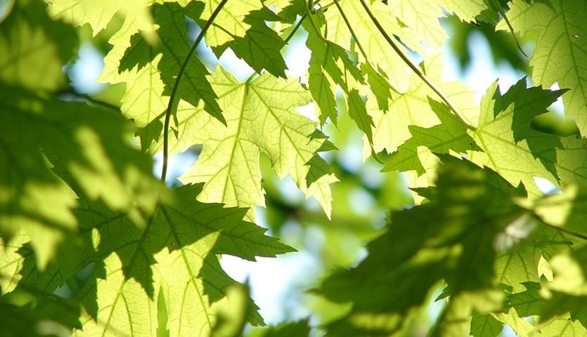 foglie-e-potature-piante
