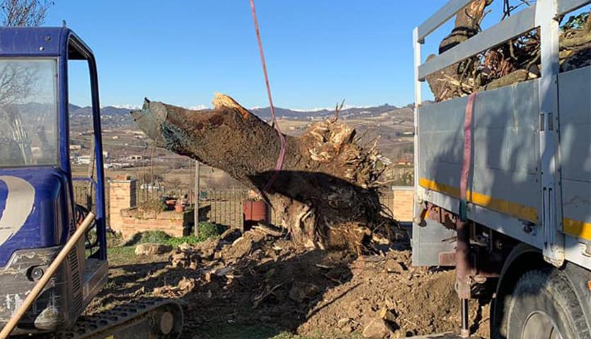 abbattimento e rimozione alberi