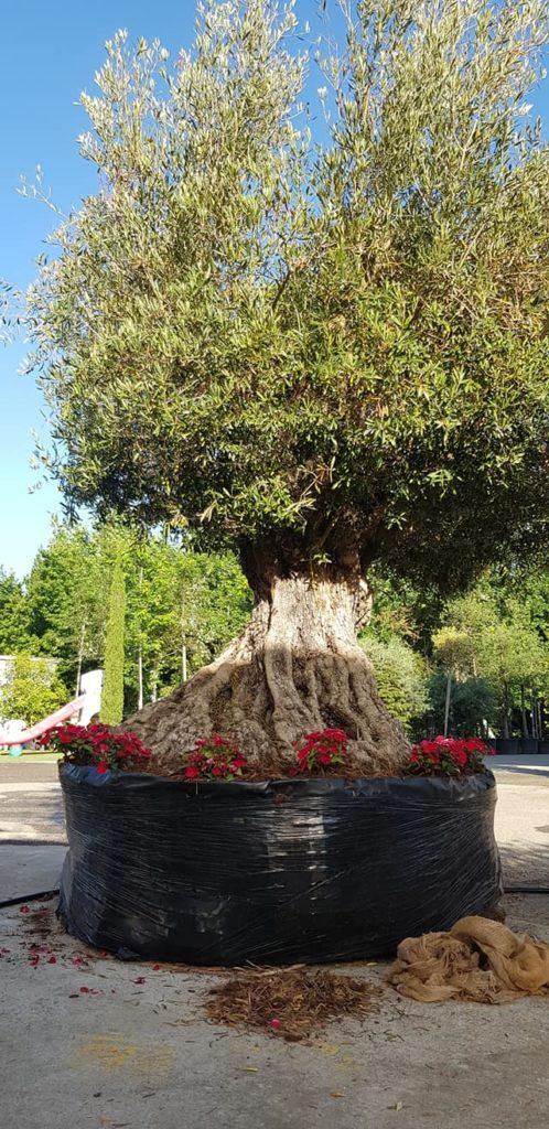 vendita alberi asti
