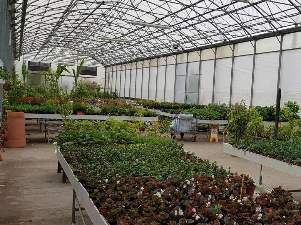 Piante Da Frutto Sempreverdi vendita piante - piante, albero da frutto e sempreverde